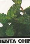 Fragancia Clorofila Menta-China